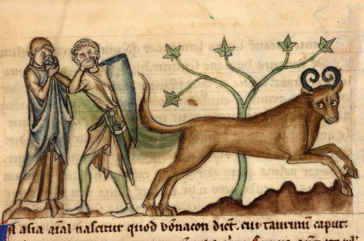 Фото открытки, средневековые картинки с прикольными надписями новые серии